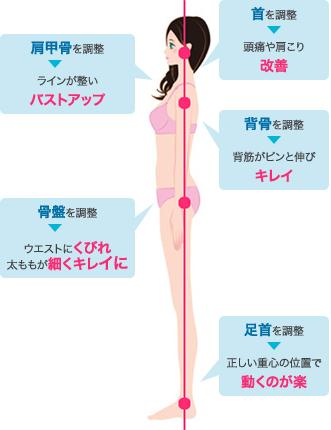 首を調整し頭痛や肩こりを改善、肩甲骨を調整するとラインが整いバストアップ、背骨を調整すると背筋がピンと伸びキレイに、骨盤を調整してウエストにくびれ、太ももが細くキレイに、足首を調整し正しい重心の位置で動くのが楽になります